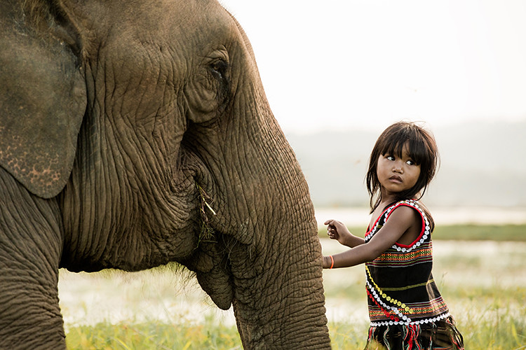 little girl and elephant