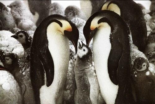 tomasz gudzowaty penguins